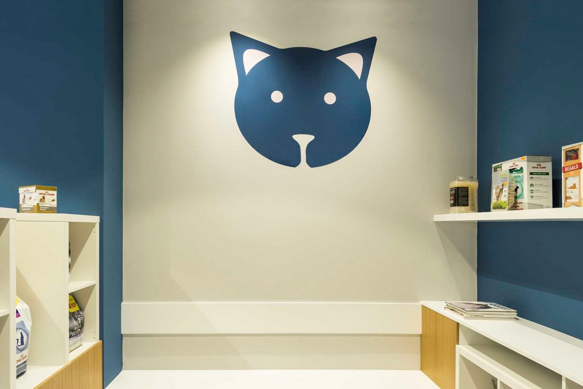 proyecto sala espera veterinaria Pontevedra Ponteareas
