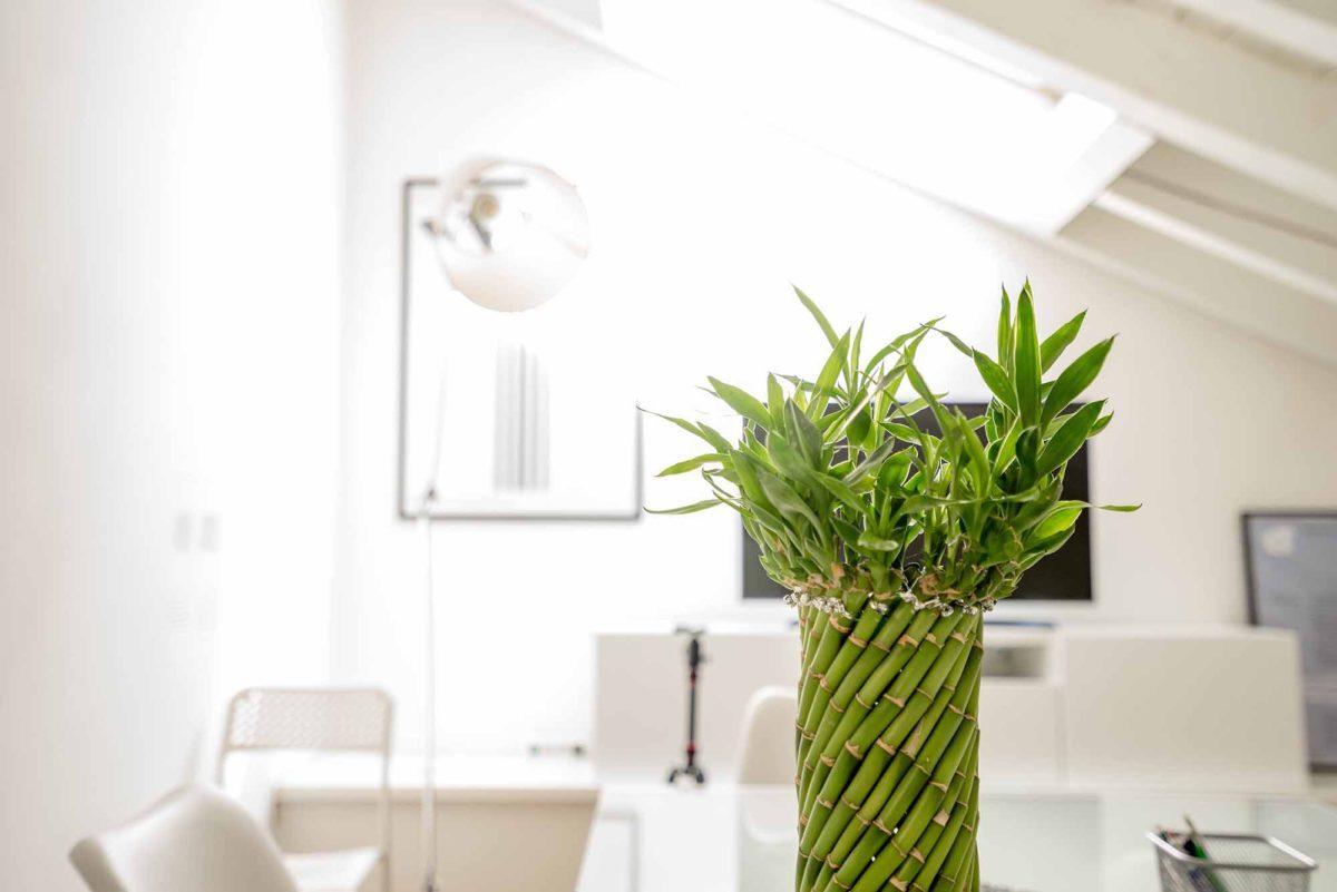 ¿Cómo decorar una clínica?