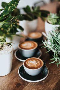 Las plantas aportan variedad y dan un toque fresco a los negocios a la vez que sirven para decorar un bar o una cafetería sin gastarse un dineral